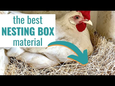 The Best Chicken Nesting Box Material for Clean Eggs