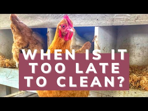 How to Clean Your Chicken Coop! (Even When It's a Disaster)
