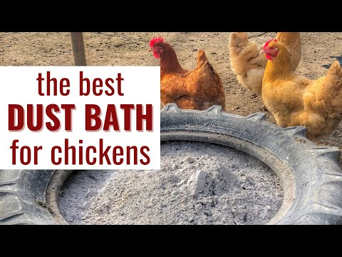 How to Make a Dust Bath for Your Chickens (With the Right Ingredients)