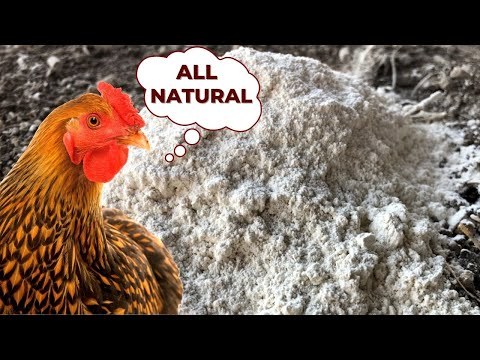 Every Chicken Keeper Needs This ONE Product!