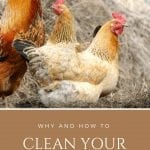 Benefits of a Clean Chicken Coop