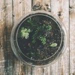 homemade succulent soil