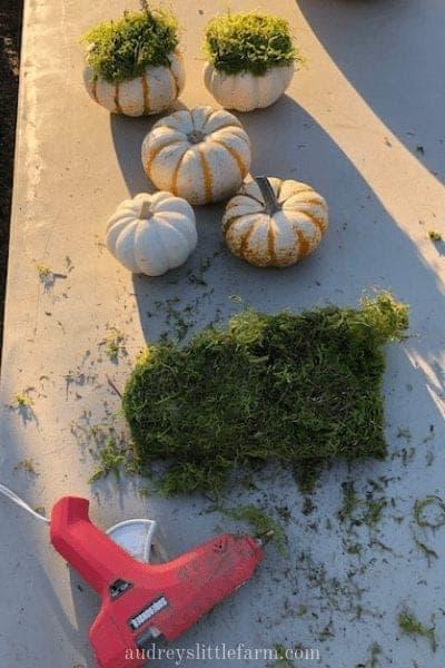 Pumpkins, a Hot Glue Gun, and Moss