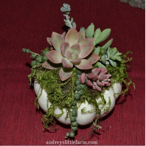 Succulents on Top of a Small Pumpkin