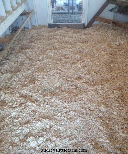 Clean Chicken Coop Bedding Inside a Clean Chicken Coop
