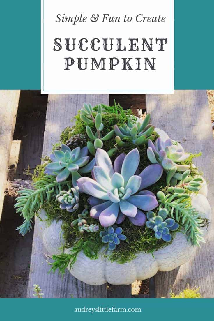 A Large Pumpkin With Succulents