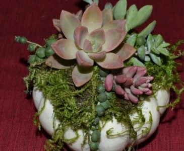 A Small Pumpkin Topped With Succulents