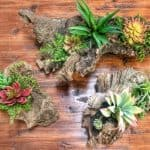Artificial Succulent Arrangements Made on Driftwood