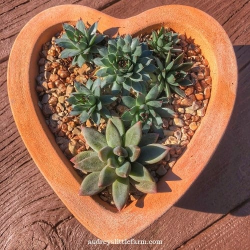 Succulents Planted in a Heart Shaped Garden Pot