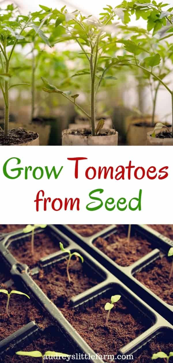 An Image of Tomato Plants That Says Grow Tomatoes From Seed