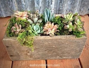 Succulents Planted in a Barn Wood Box