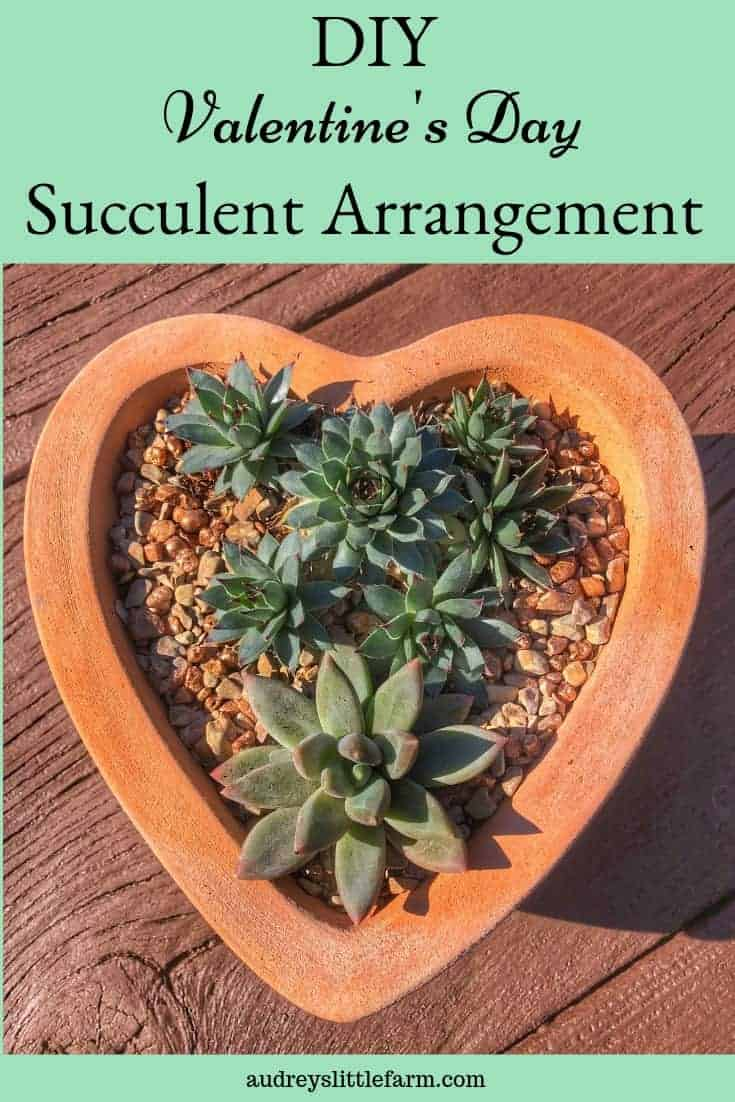 A Heart Shaped Pot With Succulents Planted in it for Valentine's Day