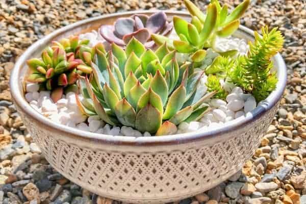Succulents Planted in a White Pot for Easter