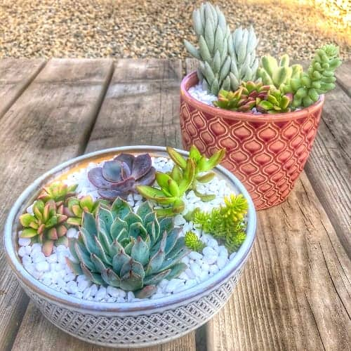Easter Inspired Succulent Arrangements