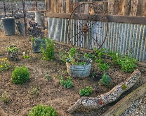 An Edible Herb Garden Beside a Chicken Coop