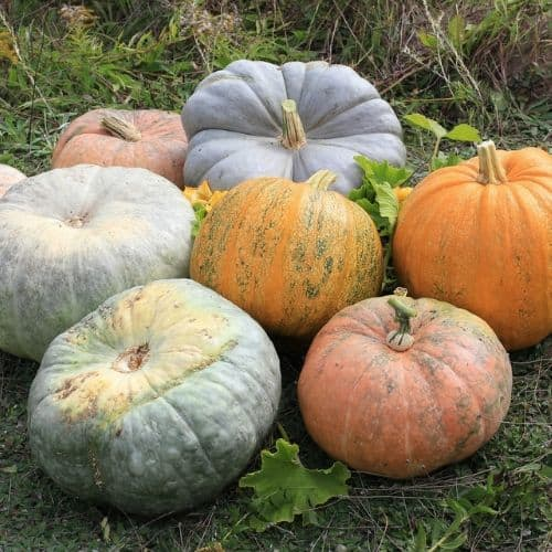 A Variety of Harvested Pumpkins
