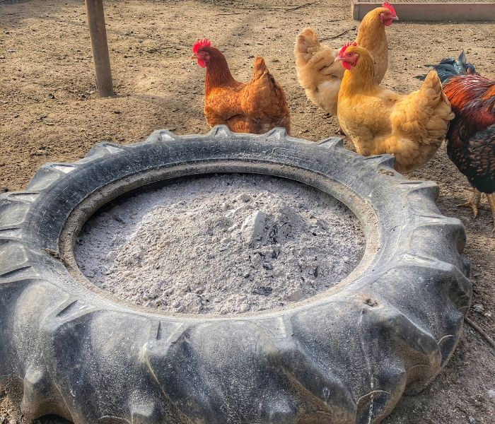 A Chicken's Dust Bath With Wood Ash, Sand, and Diatomaceous Earth