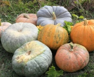 A Variety of Different Types of Pumpkins