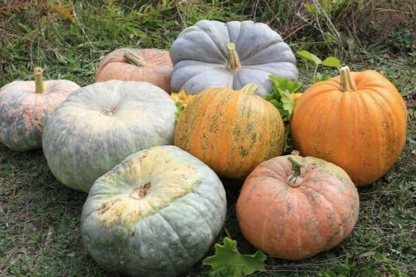 Different Types of Pumpkins and Their Uses