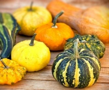 Different Varieties of Winter Squash