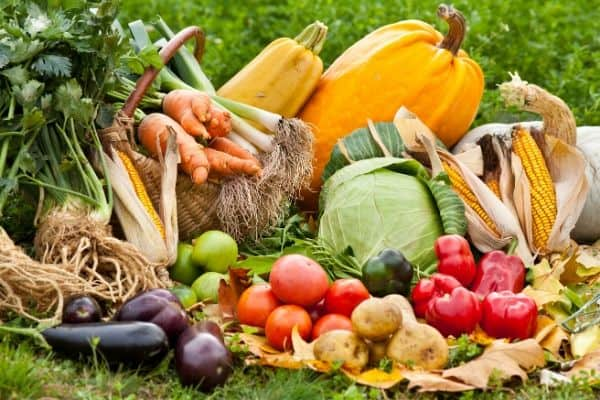 The Best Zone 9b Vegetables to Grow
