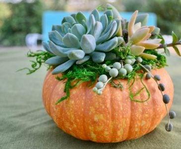 Succulent Topped Pumpkin