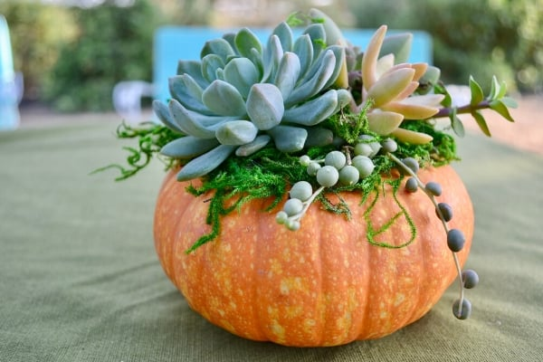 How to Make a Succulent Topped Pumpkin