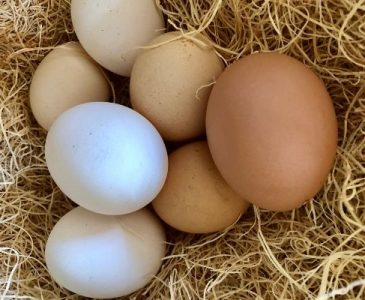Eggs in a Chicken Nesting Box
