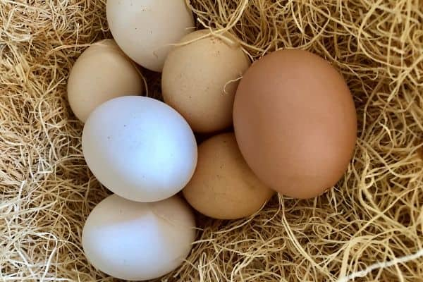 Chicken Nesting Boxes: All You Need to Know