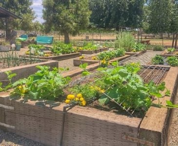 Audrey's Vegetable Garden