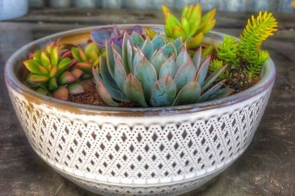 How to Replant Succulents Successfully