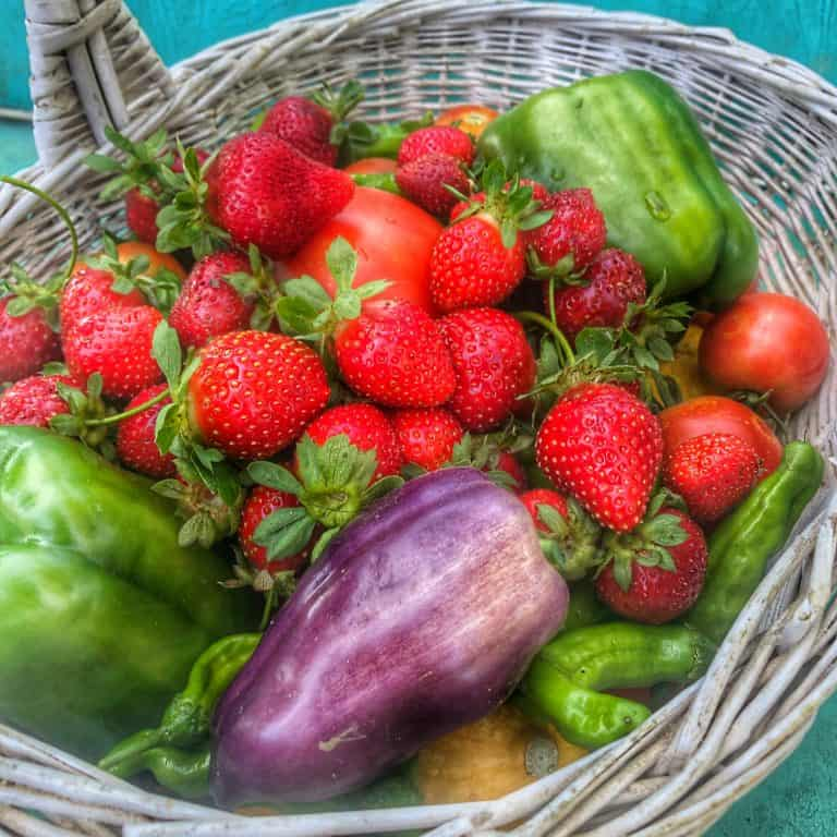 Fresh Vegetables from the Garden