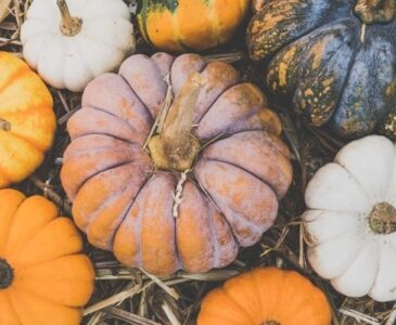 Different Types of Pumpkins on the Ground