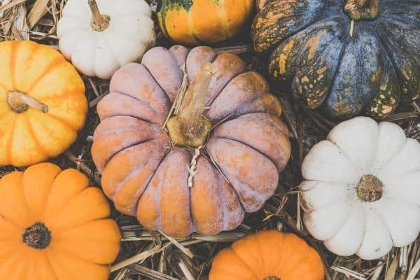 Best Edible Pumpkins for Baking and More