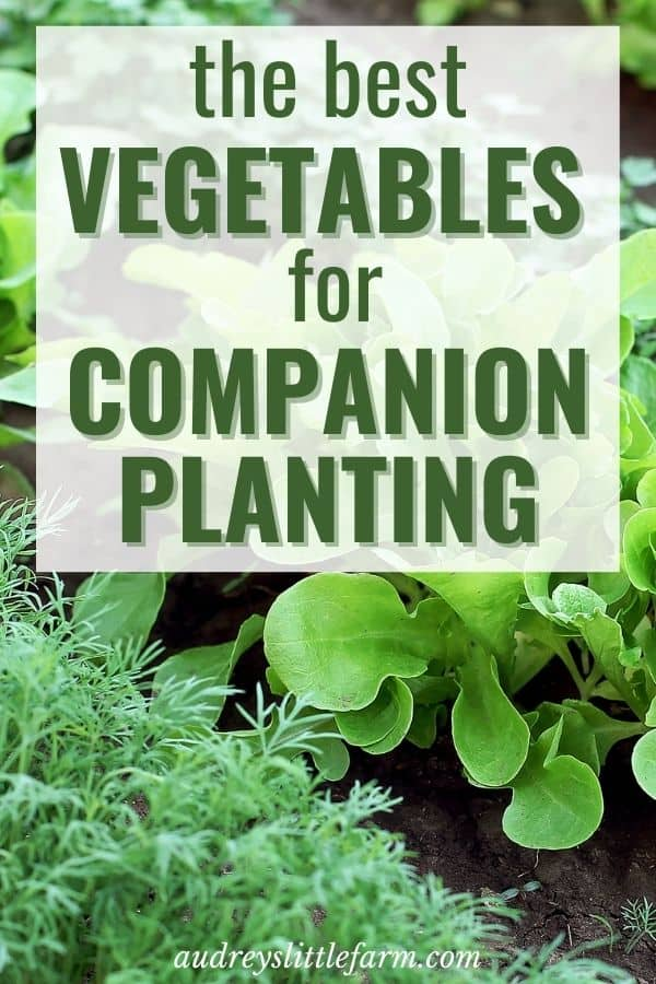 Companion Vegetables Planted in a Garden