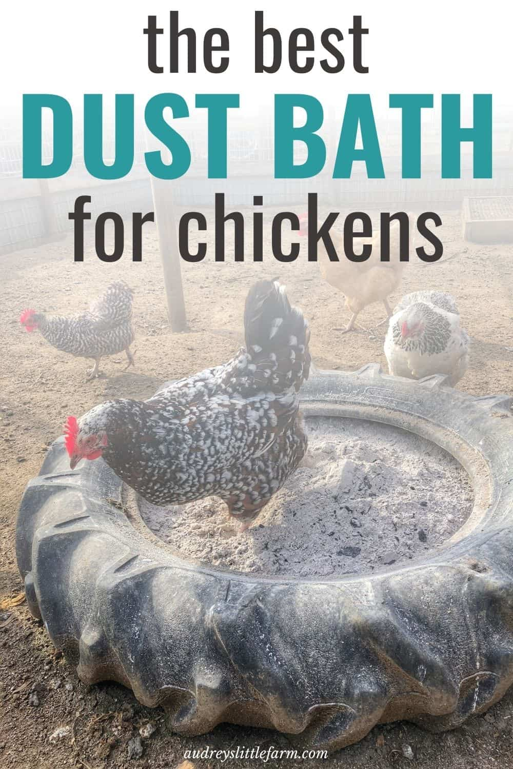 A Chickens Dust Bath in a Tractor Tire