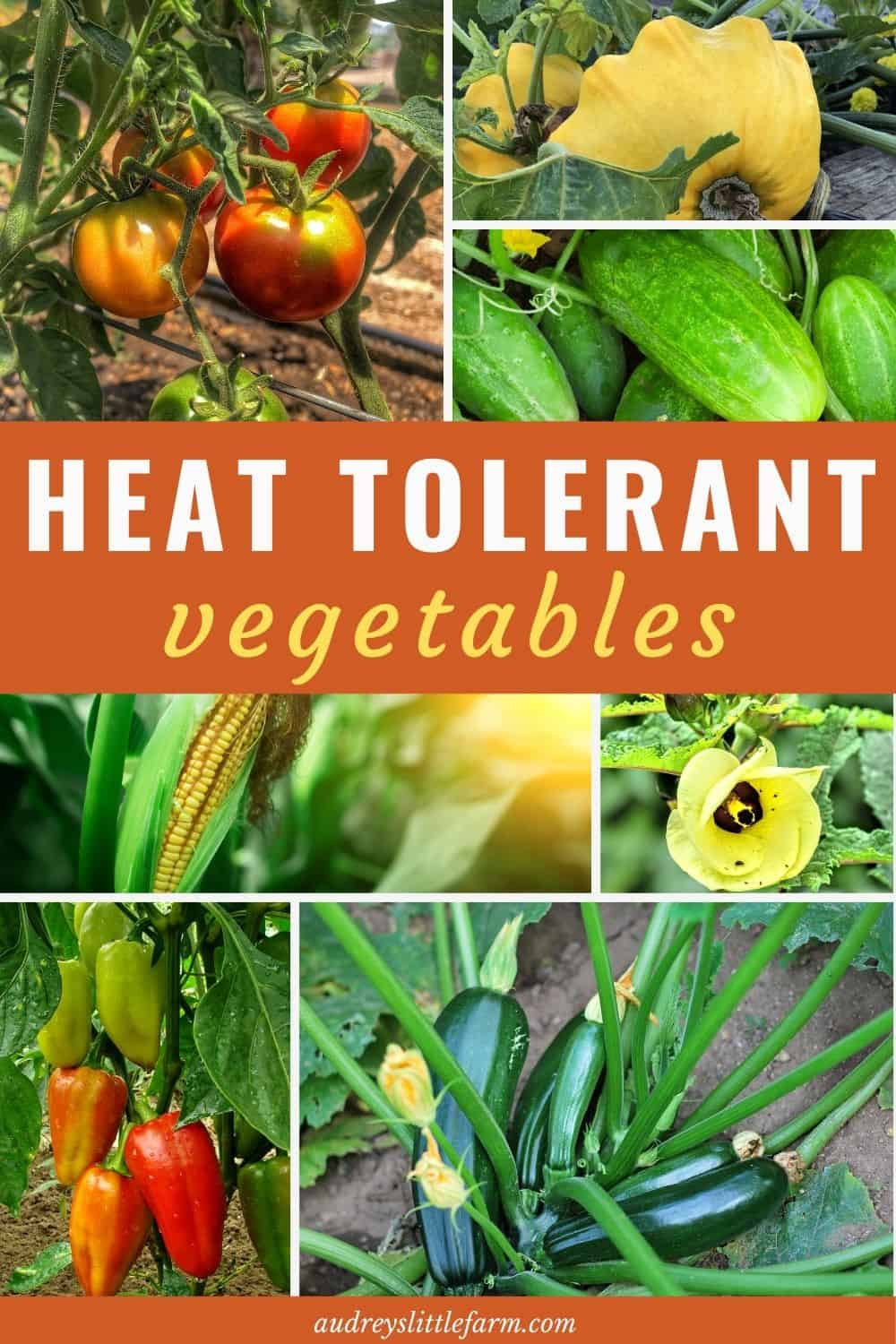 Heat Tolerant Vegetables Growing in the Garden