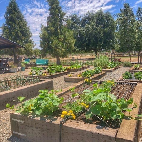 My Vegetable Garden Located in Zone 9b.