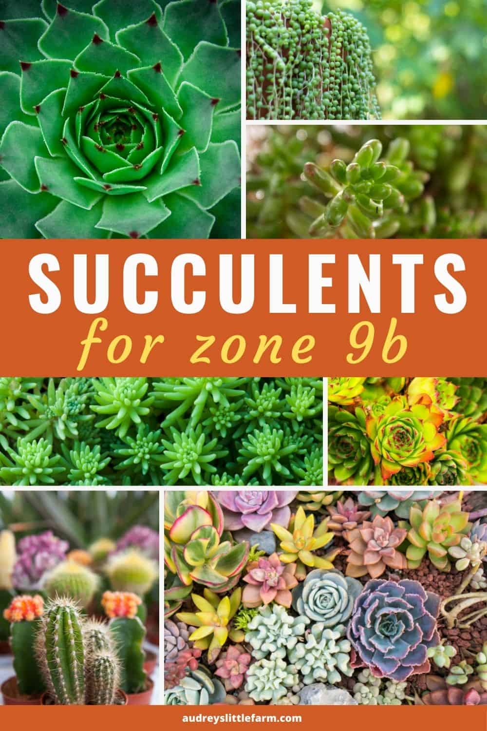 A Variety of Succulents Growing in Zone 9b