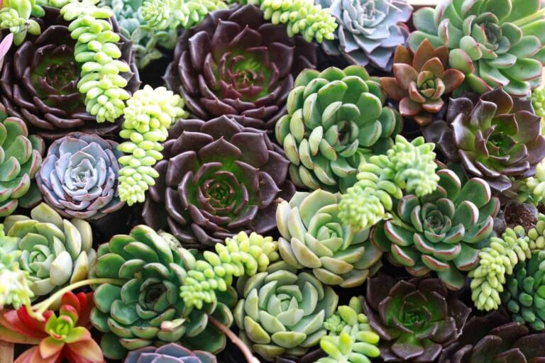 The Best Succulents for Zone 9b