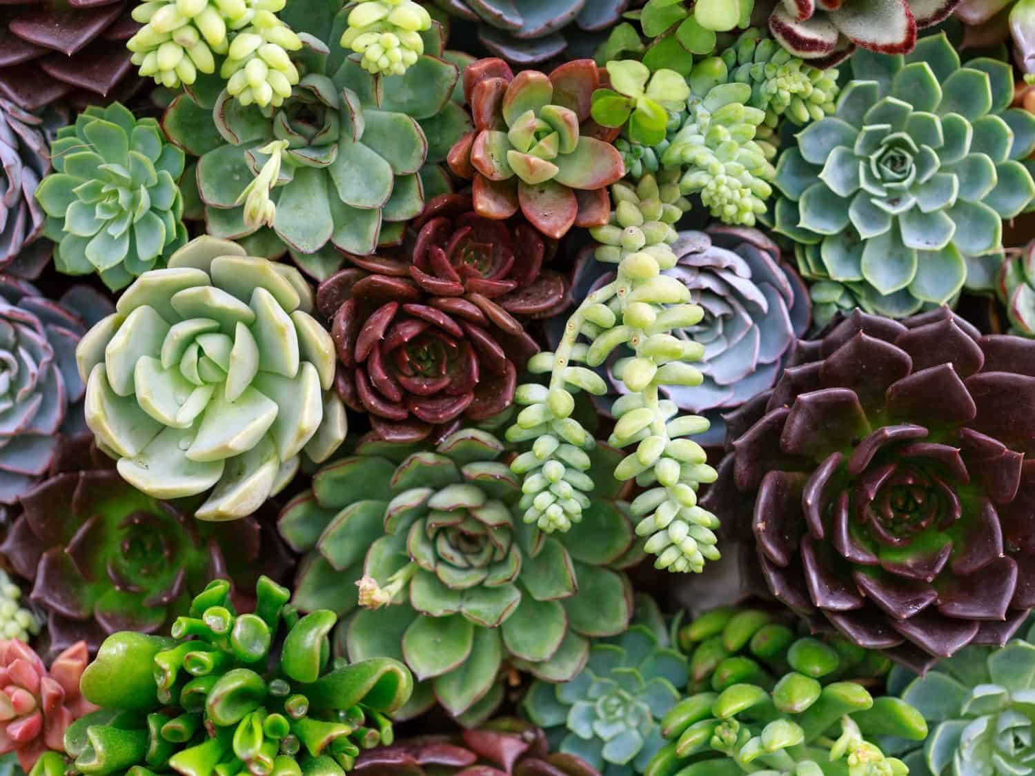 A Variety of Succulents for Zone 9b